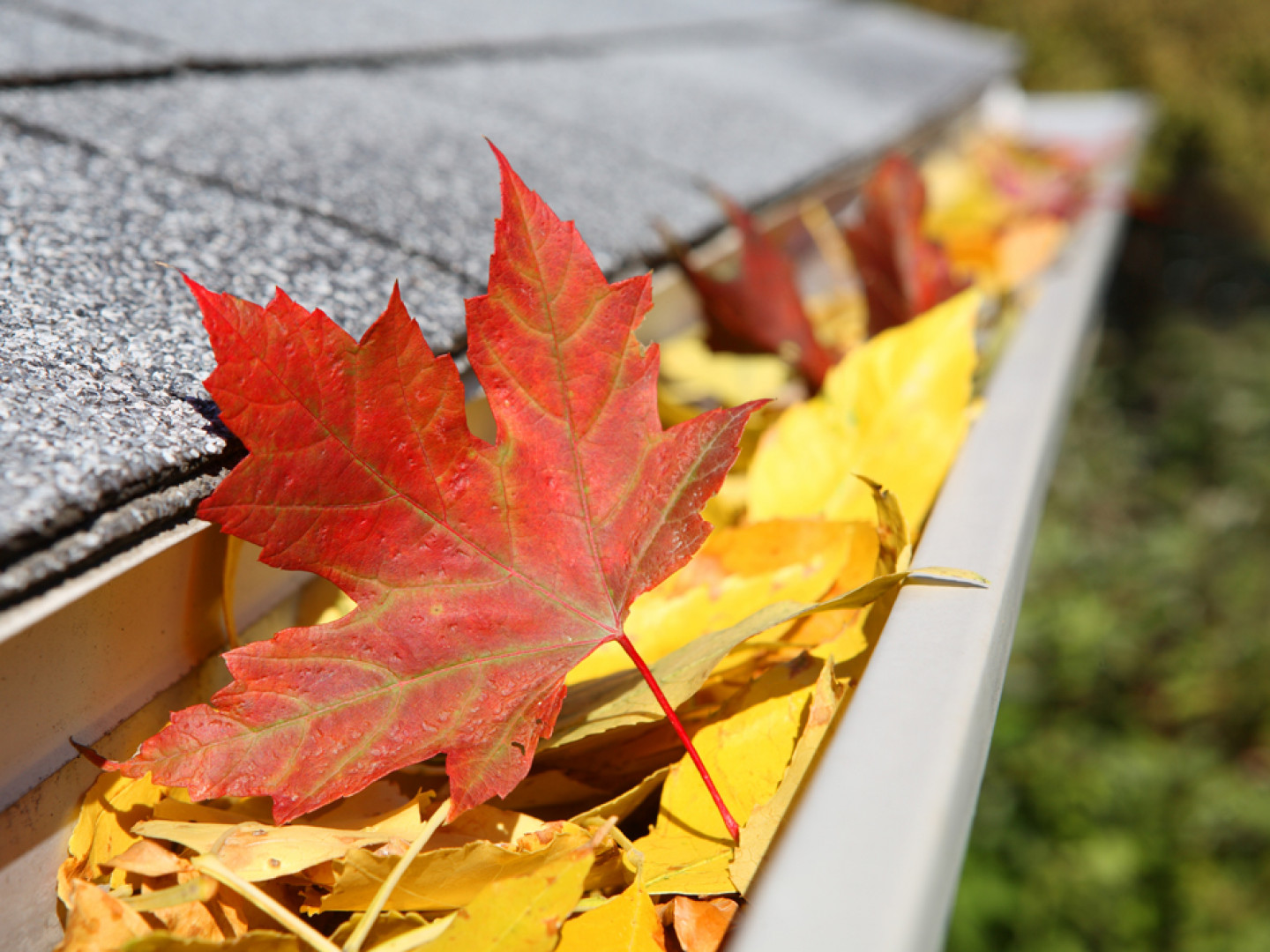 gutter cleaning services in Creve Coeur, Missouri